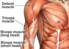 shoulders-and-arms